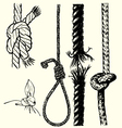knots and ropes vector image