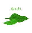 matcha tea leaves - natural organic plant flat vector image vector image