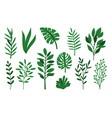 palm green leaves on white vector image