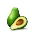 realistic avocado vector image vector image
