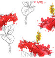 seamless pattern with flowers of hibiscus vector image vector image