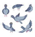 cartoon set of funny pigeons of vector image vector image