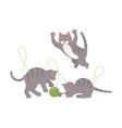 cute gray kittens play with ball of threads vector image