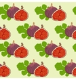 fruits and leaves of fig vector image vector image