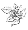 hand-draw mistletoe ink vector image