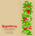 lingonberry branches pattern vector image