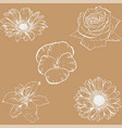 pastel backdrop with hand drawn contour flowers vector image