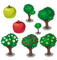 Planting and cultivation of green and red apple vector image vector image