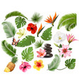 big collection exotic and tropical leaves and vector image vector image
