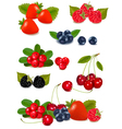 big group of fresh berries vector image vector image