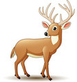 cartoon deer isolated on white background vector image