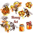 honey set or collection elements with bees vector image