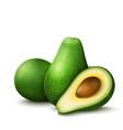realistic avocado vector image