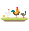 Farm animal Rooster hen chickens duck flat style vector image vector image