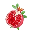 fresh watercolor pomegranate vector image vector image