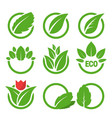 green leaves and ecological symbols vector image