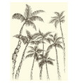 palm trees background hand drawn coconut vector image