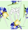 Seamless pattern with watercolor irises-04 vector image vector image