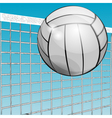 ball and net vector image