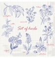 Set of isolated herbs in sketch style on paper vector image vector image