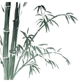 Watercolor Bamboo branches isolated on the white vector image