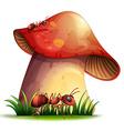 Closeup mushroom vector image