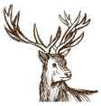 hand drawn deer big antlers wildlife poster face vector image