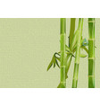 bamboo and drop vector image vector image