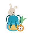 camping cute rabbit rucksack and compass leaves vector image vector image