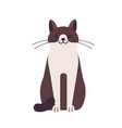 cute funny happy cat isolated on white background vector image vector image