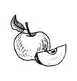 ink drawing apple vector image