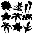 tropical flowers silhouettes set vector image vector image