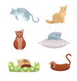 a set cute long-haired and short-haired cats vector image vector image