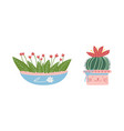 decorative flower and plant growing in ceramic pot vector image