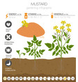 mustard beneficial features graphic template vector image vector image