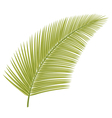 Palm leaf vector image vector image