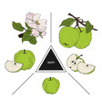 set of fruits whole apples half apple and a slice vector image vector image