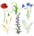 wildflowers set vector image vector image