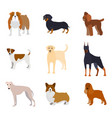 cartoon breed of dogs collection icons vector image vector image