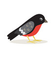 icon bullfinch with red breast in profile vector image vector image