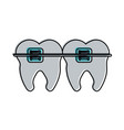 molar teeth with braces dentistry icon image vector image