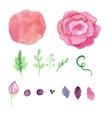Watercolor rose splash elements set Vintage vector image