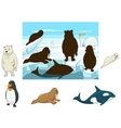 arctic animals educational game for kids
