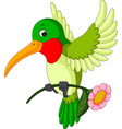 cartoon funny hummingbird vector image vector image