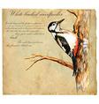 Hand painted Bird Woodpecker vector image
