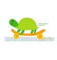 Turtle skateboarding vector image