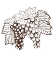 Bunch of grapes sketch style vector image vector image
