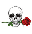 hand drawn happy human skull with red rose vector image