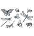 insects sketch decorative set in sketch style vector image vector image