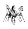 three horses run gallop on white background hand vector image